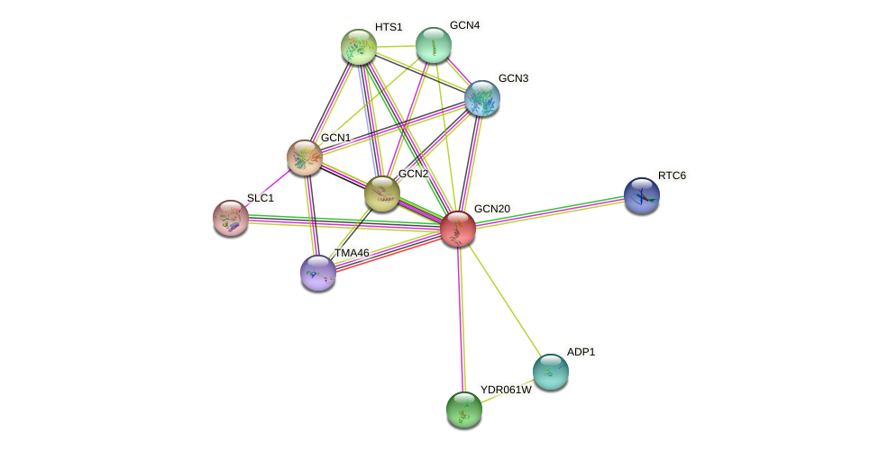 GCN20 protein (Saccharomyces cerevisiae) - STRING interaction network