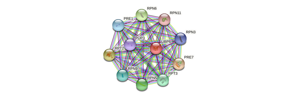 UBP6 protein (Saccharomyces cerevisiae) - STRING interaction network