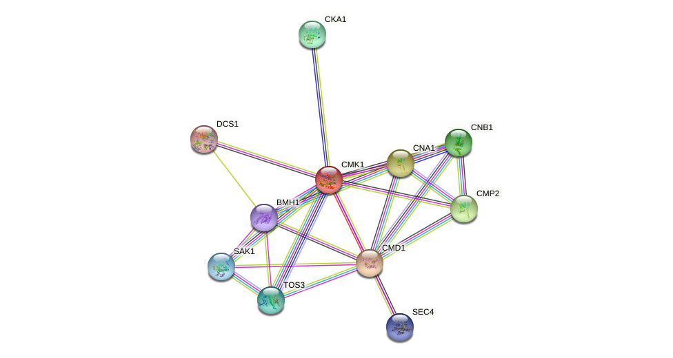CMK1 protein (Saccharomyces cerevisiae) - STRING interaction network