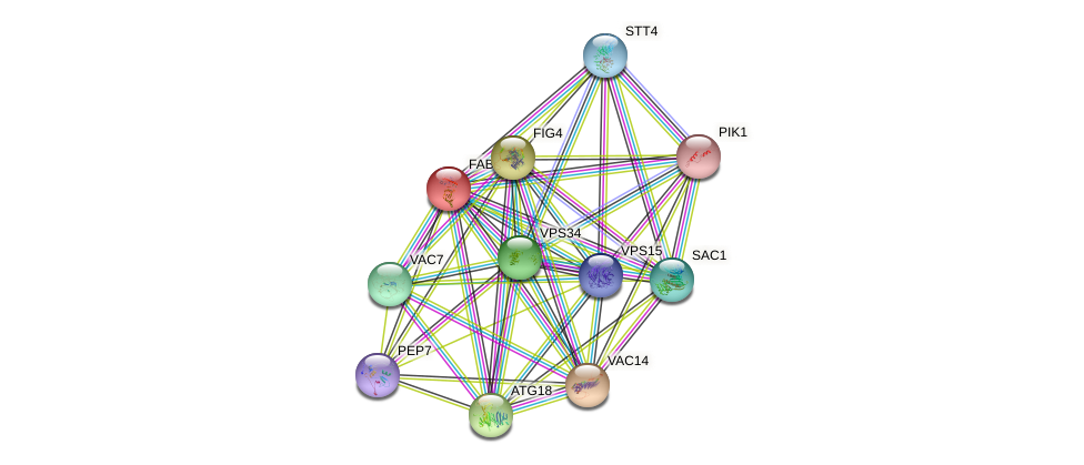 FAB1 protein (Saccharomyces cerevisiae) - STRING interaction network