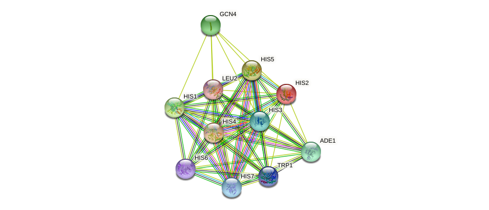 HIS2 protein (Saccharomyces cerevisiae) - STRING interaction network