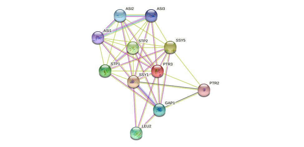 PTR3 protein (Saccharomyces cerevisiae) - STRING interaction network
