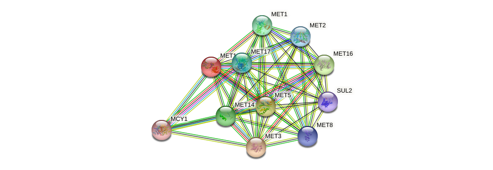 MET10 protein (Saccharomyces cerevisiae) - STRING interaction network