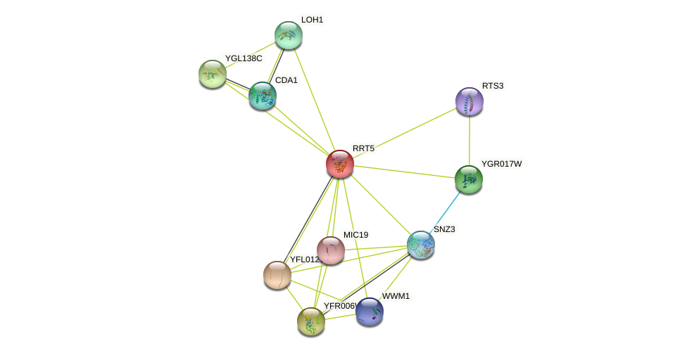 RRT5 protein (Saccharomyces cerevisiae) - STRING interaction network