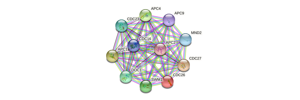 CDC26 protein (Saccharomyces cerevisiae) - STRING interaction network