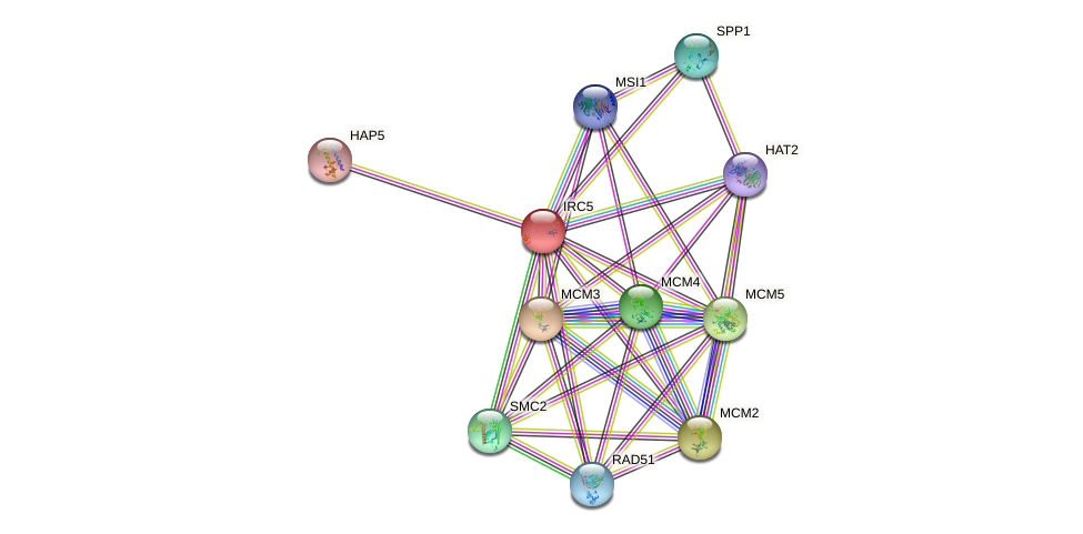 IRC5 protein (Saccharomyces cerevisiae) - STRING interaction network