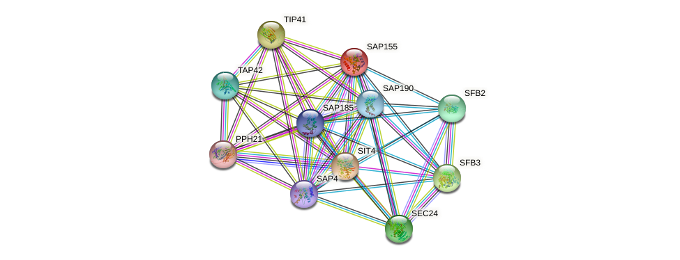 SAP155 protein (Saccharomyces cerevisiae) - STRING interaction network