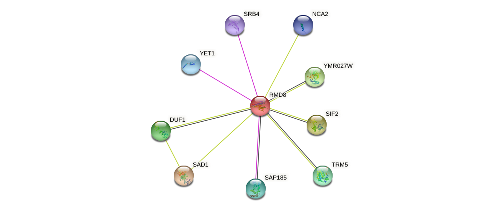 RMD8 protein (Saccharomyces cerevisiae) - STRING interaction network