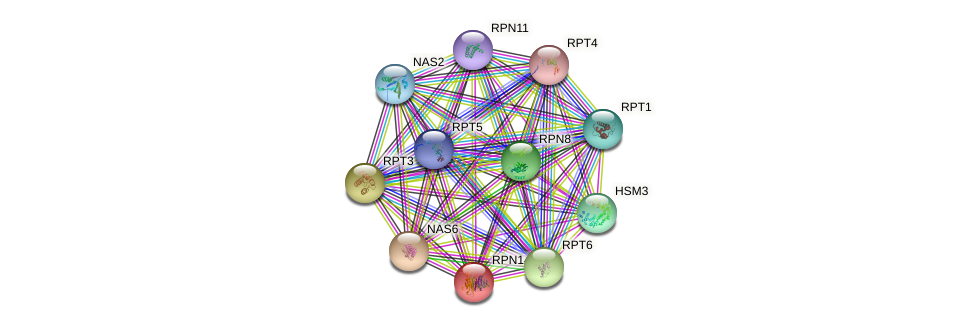 RPN14 protein (Saccharomyces cerevisiae) - STRING interaction network