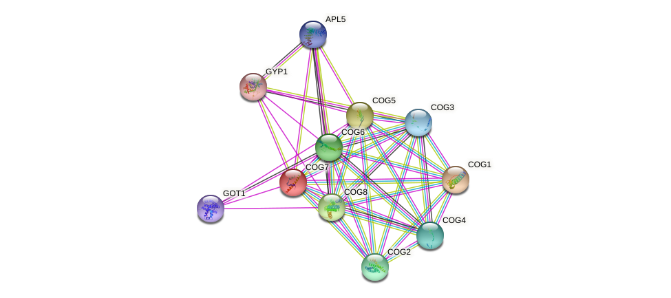 COG7 protein (Saccharomyces cerevisiae) - STRING interaction network