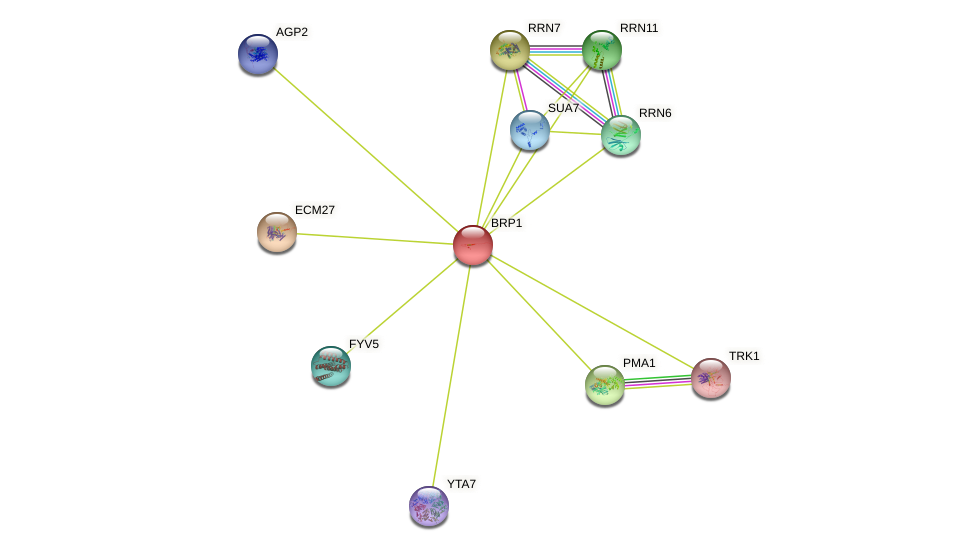 BRP1 protein (Saccharomyces cerevisiae) - STRING interaction network