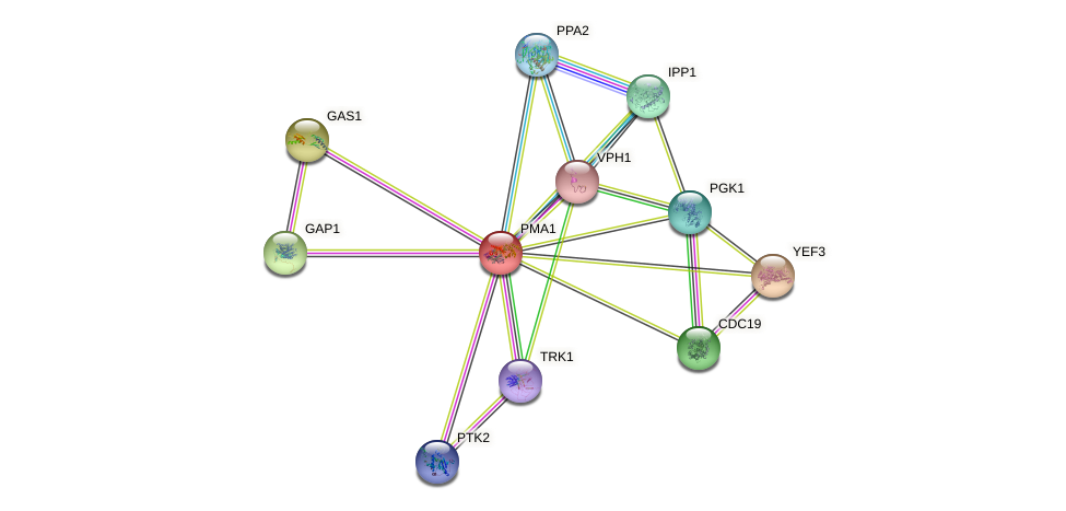 PMA1 protein (Saccharomyces cerevisiae) - STRING interaction network
