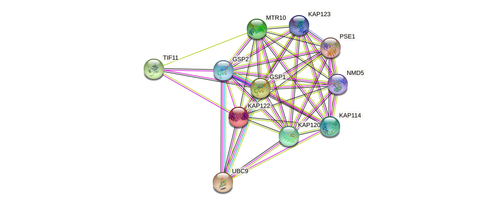 KAP122 protein (Saccharomyces cerevisiae) - STRING interaction network