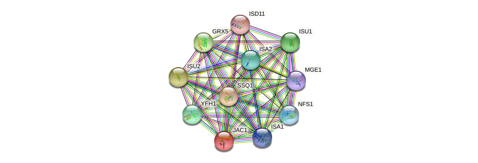 JAC1 protein (Saccharomyces cerevisiae) - STRING interaction network