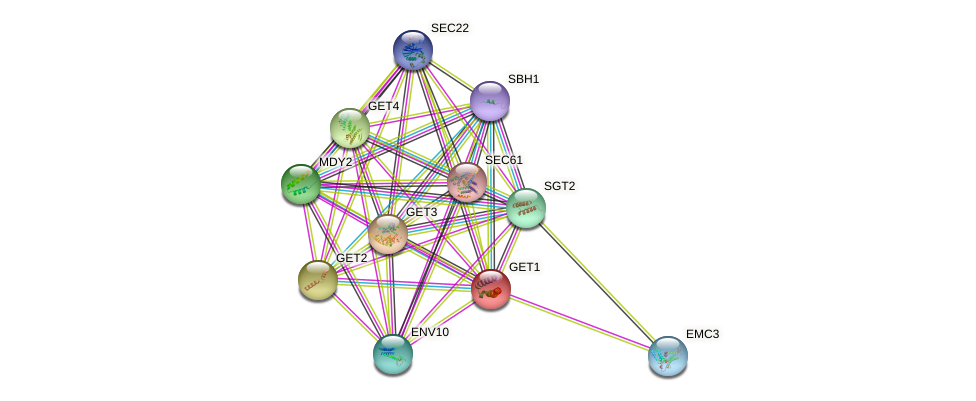GET1 protein (Saccharomyces cerevisiae) - STRING interaction network