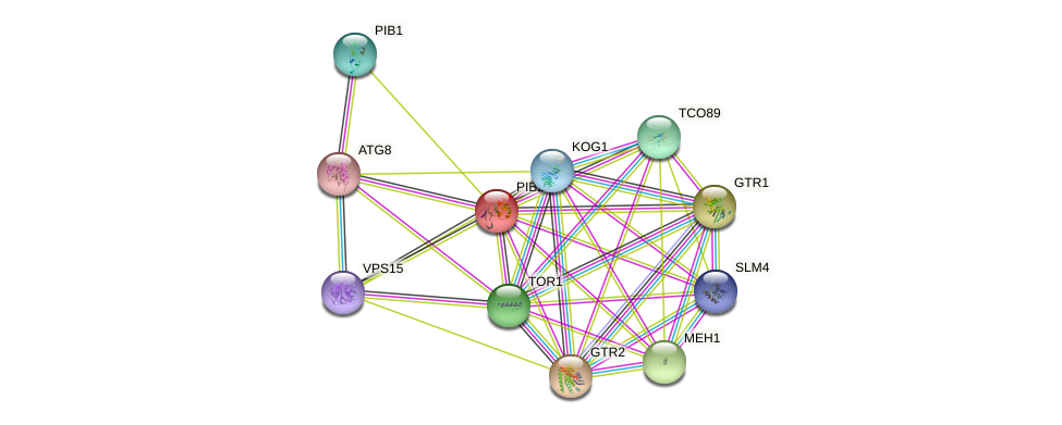 PIB2 protein (Saccharomyces cerevisiae) - STRING interaction network