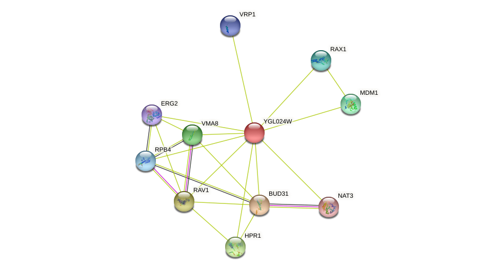 YGL024W protein (Saccharomyces cerevisiae) - STRING interaction network