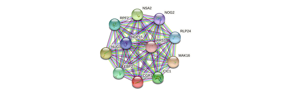 CGR1 protein (Saccharomyces cerevisiae) - STRING interaction network