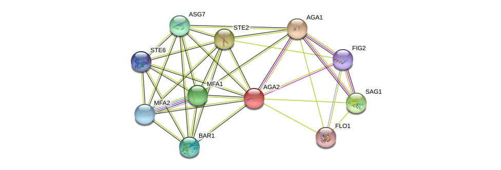 AGA2 protein (Saccharomyces cerevisiae) - STRING interaction network