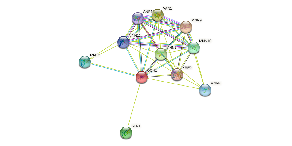 OCH1 protein (Saccharomyces cerevisiae) - STRING interaction network