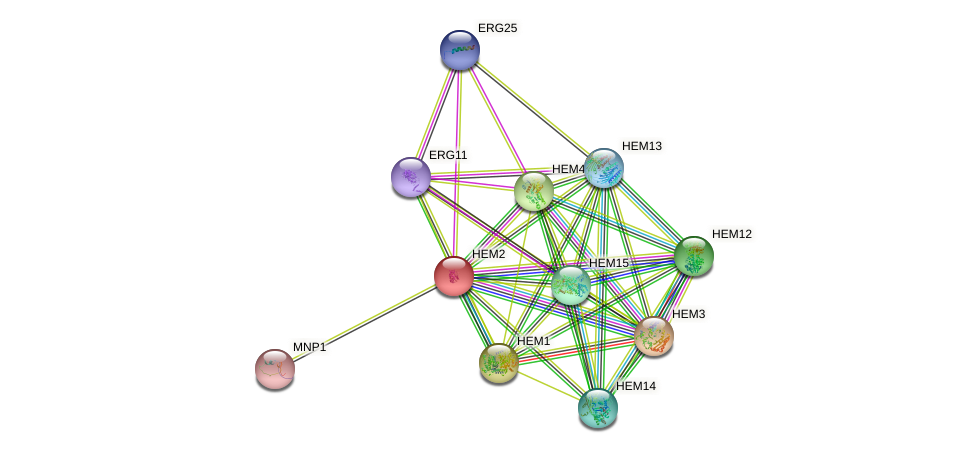 HEM2 protein (Saccharomyces cerevisiae) - STRING interaction network