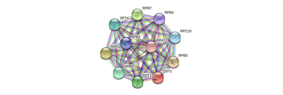 DST1 protein (Saccharomyces cerevisiae) - STRING interaction network