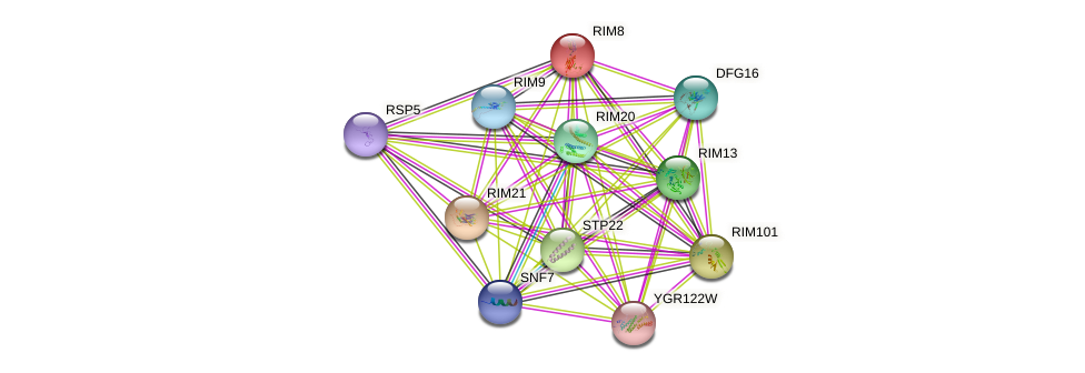 RIM8 protein (Saccharomyces cerevisiae) - STRING interaction network