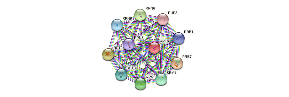 RPT6 protein (Saccharomyces cerevisiae) - STRING interaction network