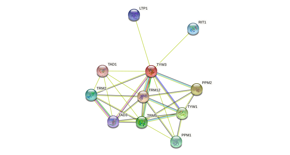 TYW3 protein (Saccharomyces cerevisiae) - STRING interaction network