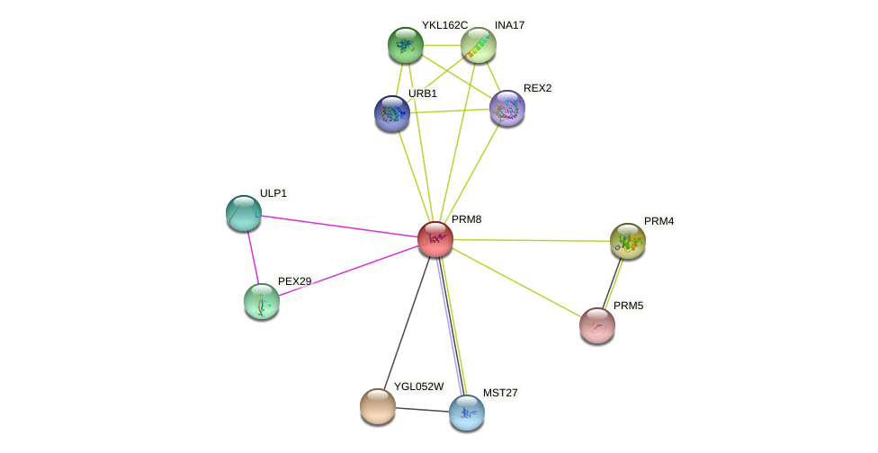 PRM8 protein (Saccharomyces cerevisiae) - STRING interaction network