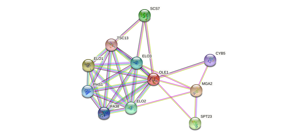OLE1 protein (Saccharomyces cerevisiae) - STRING interaction network