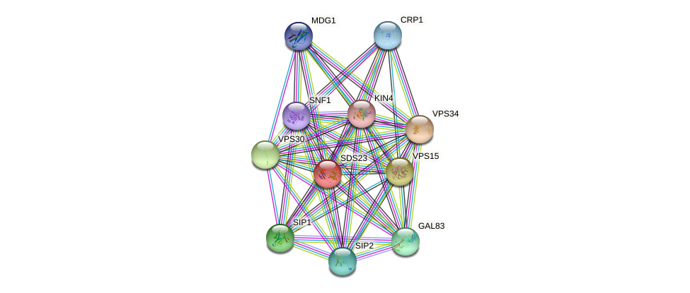SDS23 protein (Saccharomyces cerevisiae) - STRING interaction network