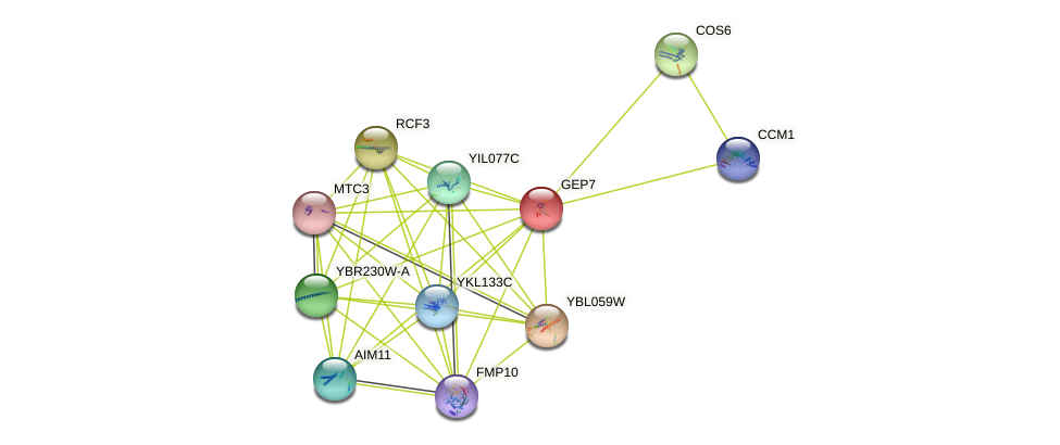 GEP7 protein (Saccharomyces cerevisiae) - STRING interaction network