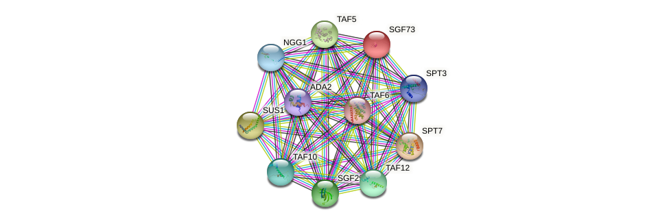 SGF73 protein (Saccharomyces cerevisiae) - STRING interaction network