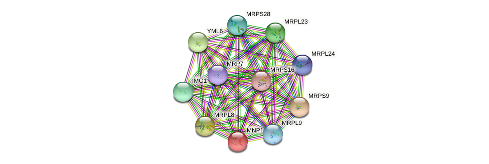 MNP1 protein (Saccharomyces cerevisiae) - STRING interaction network