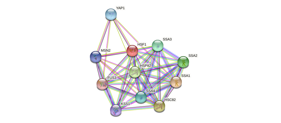 HSF1 protein (Saccharomyces cerevisiae) - STRING interaction network