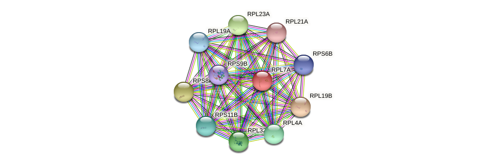 RPL7A protein (Saccharomyces cerevisiae) - STRING interaction network