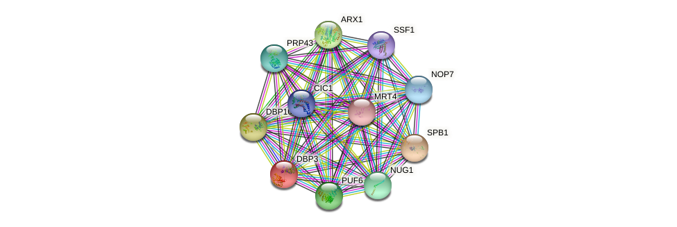 DBP3 protein (Saccharomyces cerevisiae) - STRING interaction network