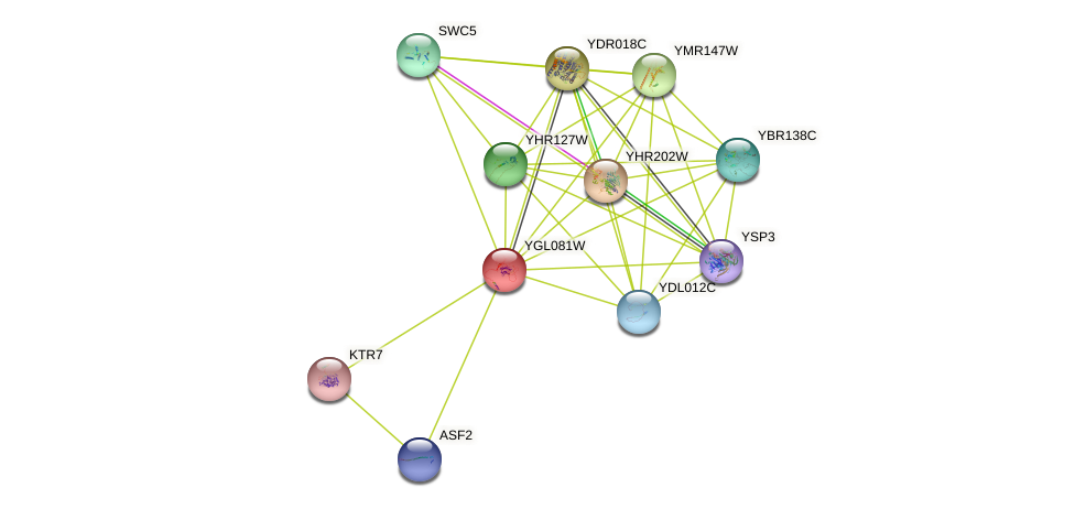 YGL081W protein (Saccharomyces cerevisiae) - STRING interaction network