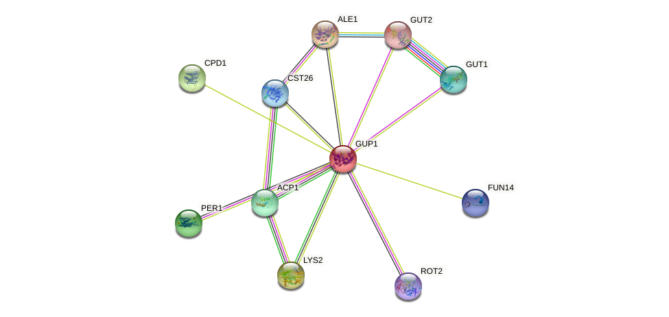 GUP1 protein (Saccharomyces cerevisiae) - STRING interaction network