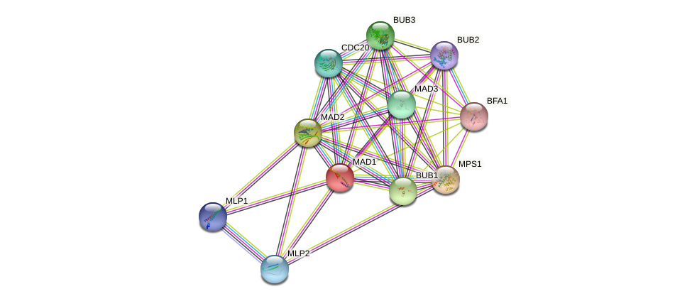 MAD1 protein (Saccharomyces cerevisiae) - STRING interaction network