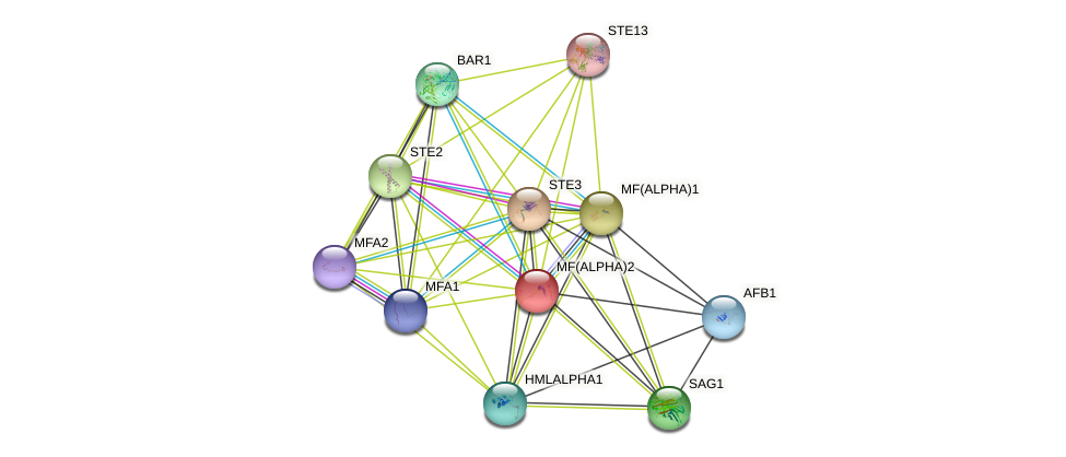 MF(ALPHA)2 protein (Saccharomyces cerevisiae) - STRING interaction network