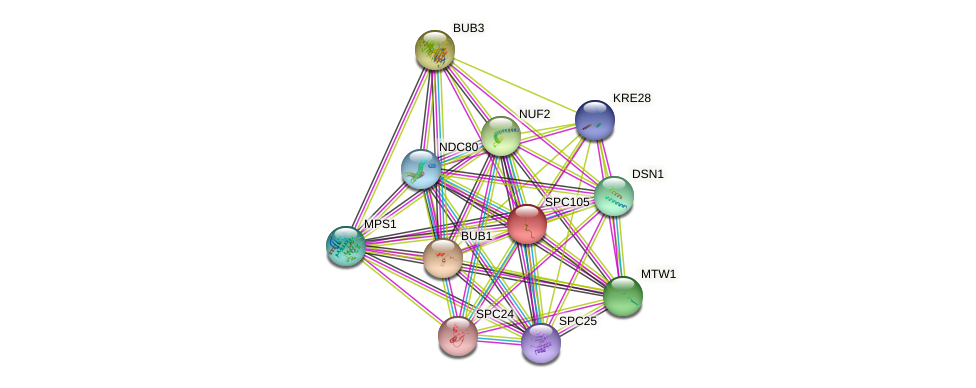 SPC105 protein (Saccharomyces cerevisiae) - STRING interaction network