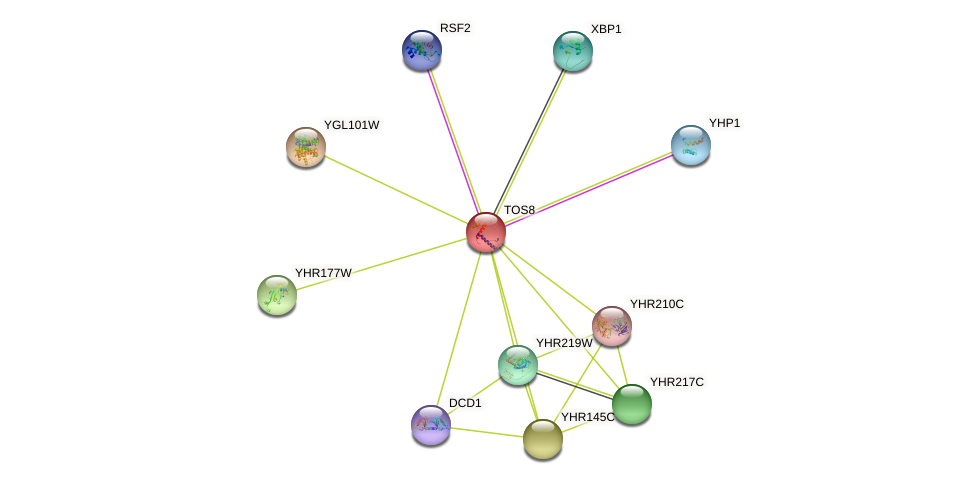TOS8 protein (Saccharomyces cerevisiae) - STRING interaction network