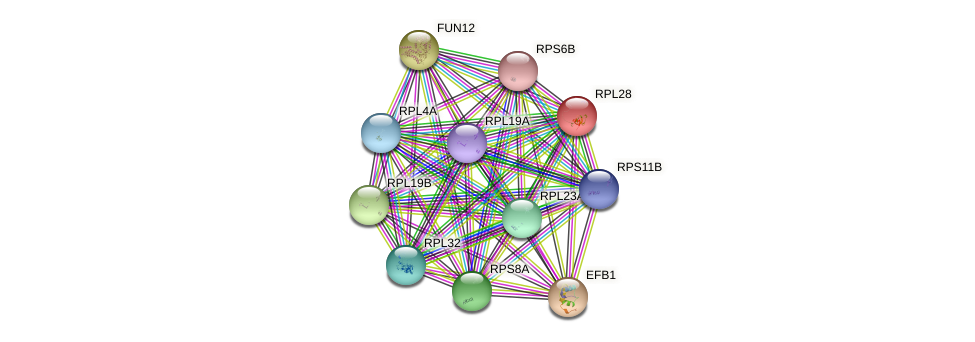 RPL28 protein (Saccharomyces cerevisiae) - STRING interaction network