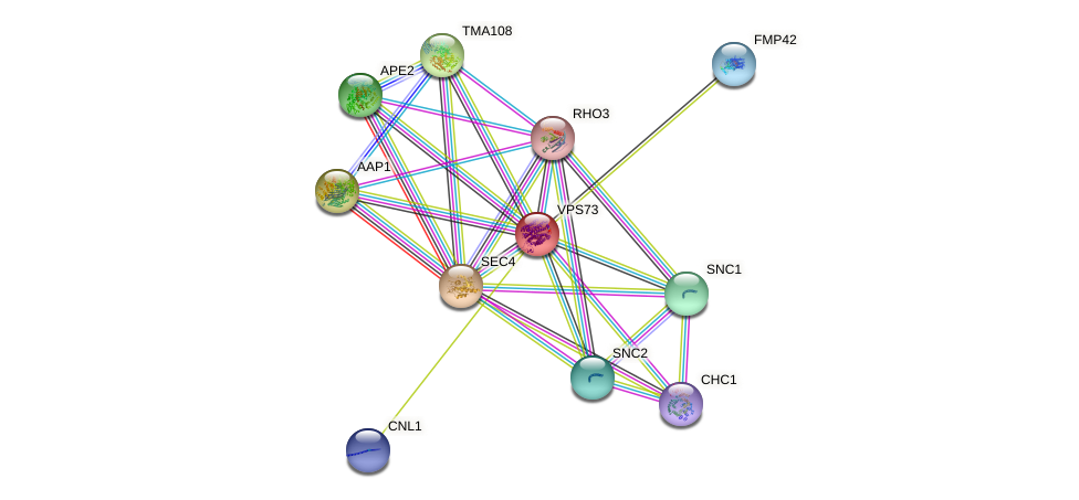 VPS73 protein (Saccharomyces cerevisiae) - STRING interaction network