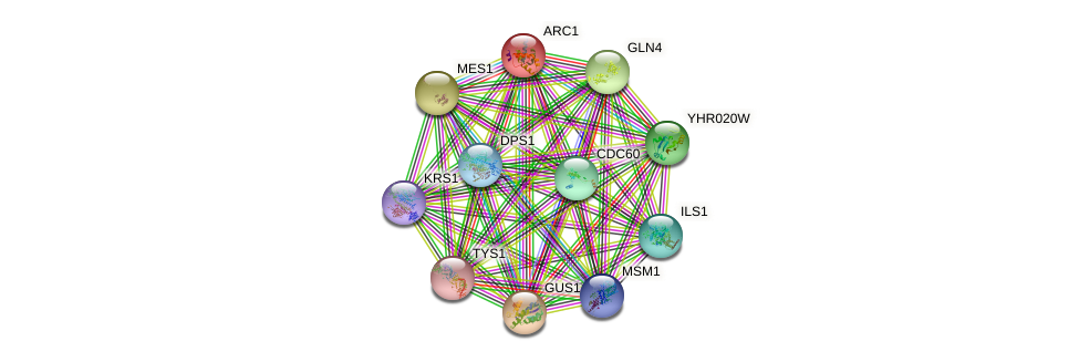 ARC1 protein (Saccharomyces cerevisiae) - STRING interaction network