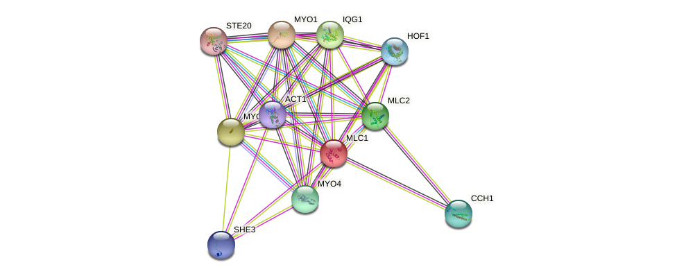MLC1 protein (Saccharomyces cerevisiae) - STRING interaction network