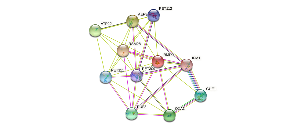 RMD9 protein (Saccharomyces cerevisiae) - STRING interaction network