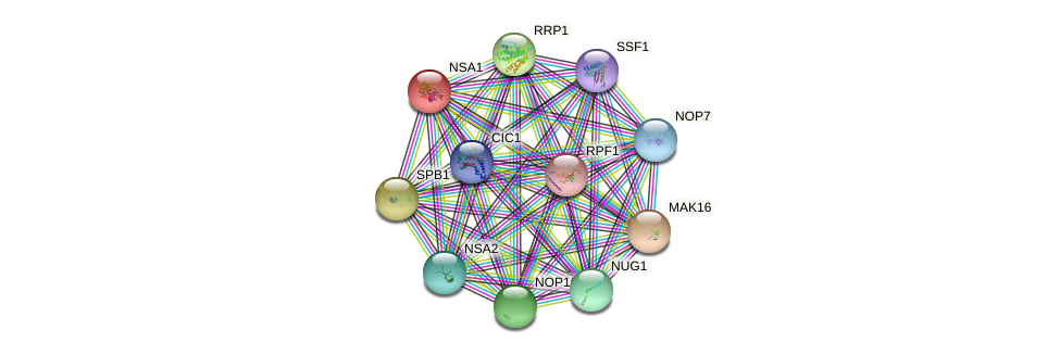 NSA1 protein (Saccharomyces cerevisiae) - STRING interaction network